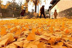 《又是一年秋叶黄》