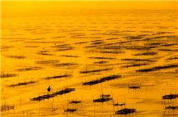 永恒的记忆---独山湾网围