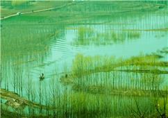 春风又绿潍河畔