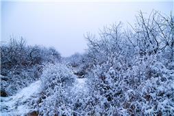 冬天美如仙境