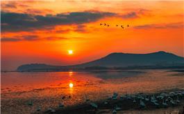 晨曦天鹅湖