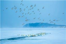 风雪天鹅湖