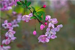 春天的颜色姹紫嫣红