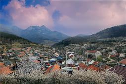樱桃花盛开的村庄