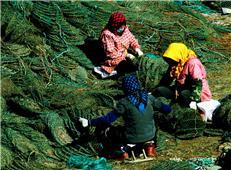 缝䃼贝笼的渔家女