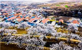 杏花村的春天