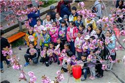 相聚樱花节