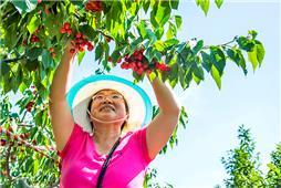 樱桃成熟的季节