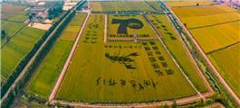 稻田画--庆祝中华人民共和国成立70周年