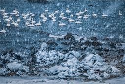 《天堂落雪》