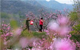 三月种花田