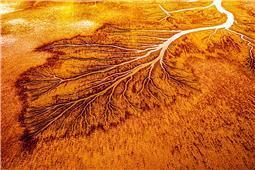 潮汐象形树