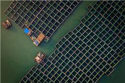 《海上养殖场》