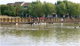 泉城有了天鹅湖