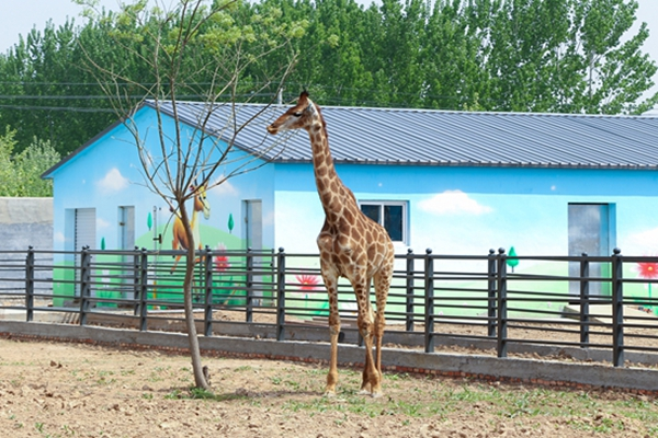 聊城野生动物园:众多稀有野生动物安家 邀市民共赴炫酷国际大马戏