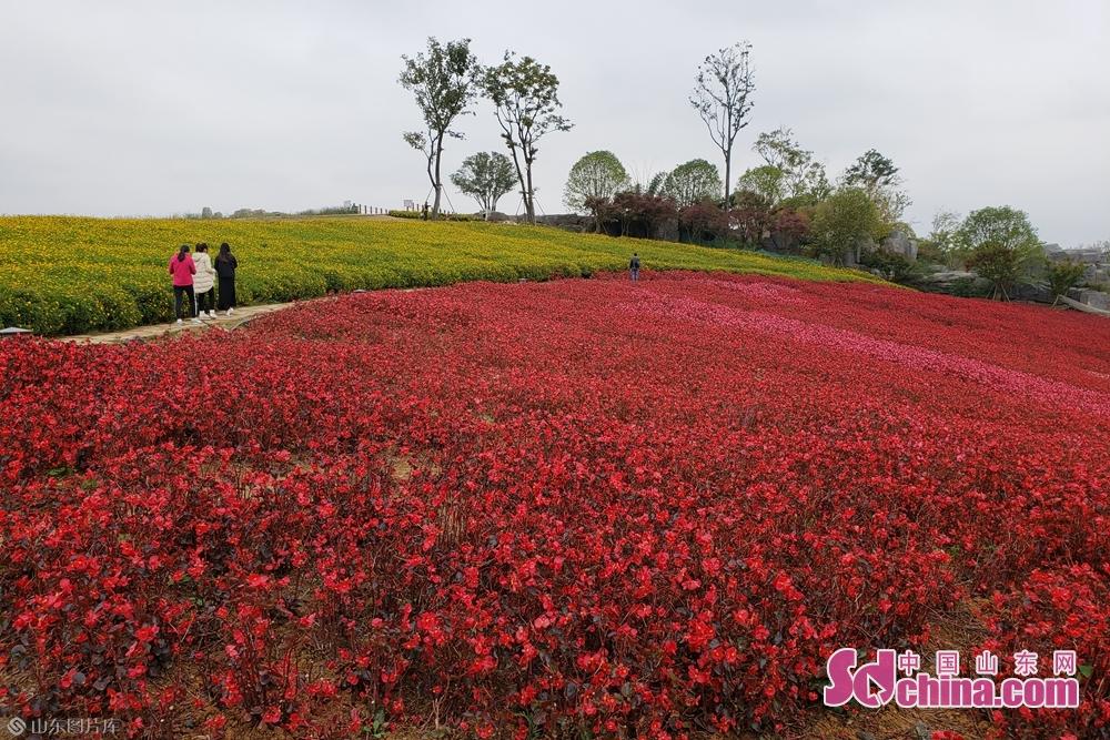 金秋时节,天河潭景区的花海却是熠熠生辉。(摄影:李红梅)<br/>