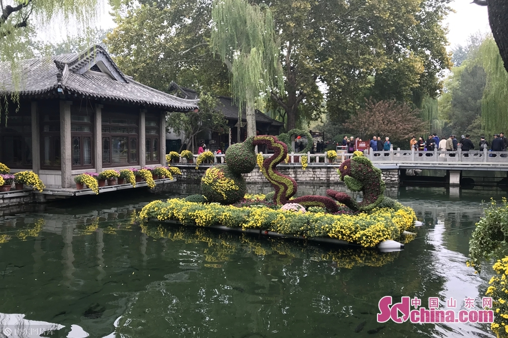 Tourists view chrysanthemum flowers at Baotu Spring scenic spot in Jinan, east China's Shandong Province, Oct. 25, 2018. A chrysanthemum fair kicked off here on Thursday and will last until November 25, 2018. (Sdchina.com/Liu Zirui)<br/>