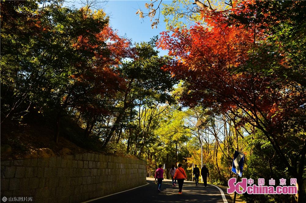 2018년 10월 30일, 관광객은 산동성 청도시 노산 북구수에서 추색을 구경하고 있다.<br/>