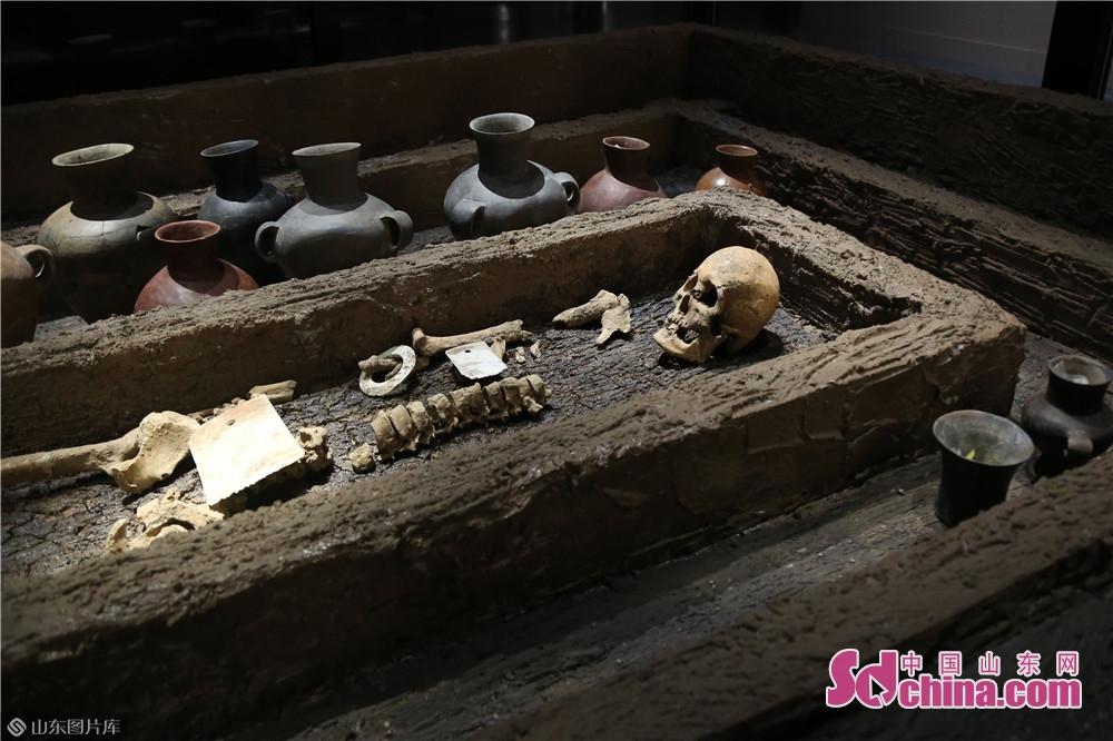 5000年前の「山東大漢」の遺体、身長は1.9メートル。<br/>