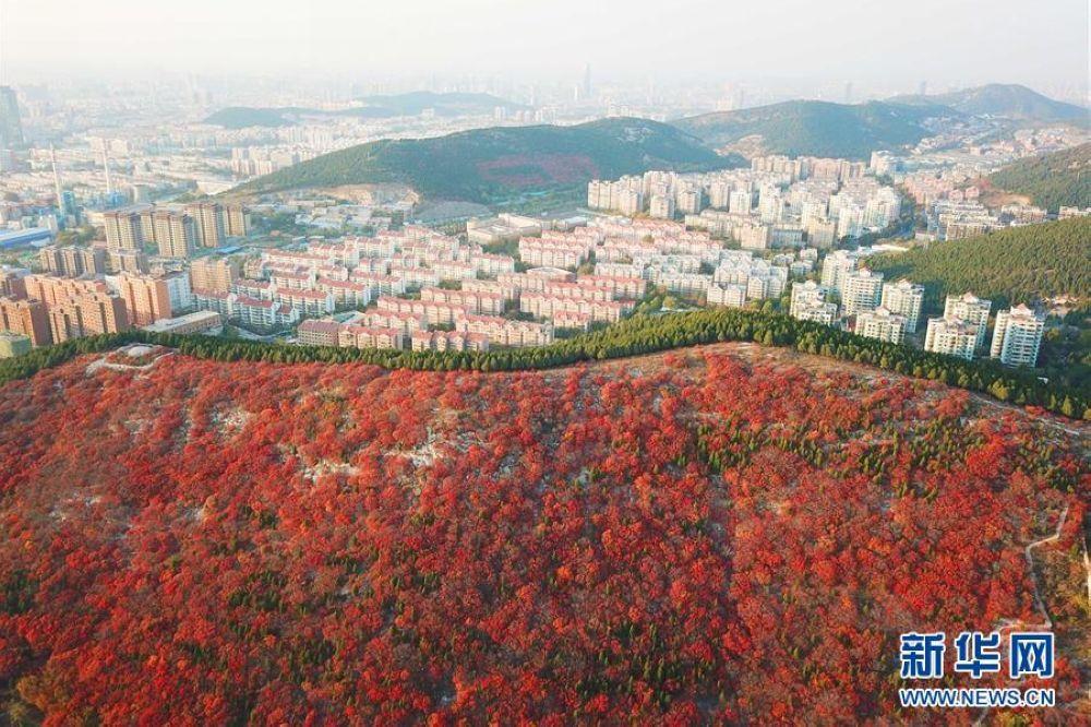 秋になり、山東省済南市の楔子山に2種類の紅葉があり、とても美しい。(撮影:新華社記者朱峥)<br/>