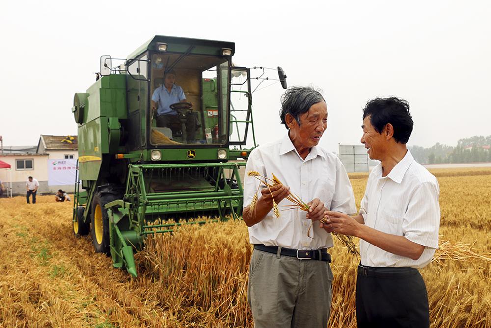2014年,烟台小麦亩产800公斤关键技术示范成功并推广,全国领先。(张焕春)<br/>