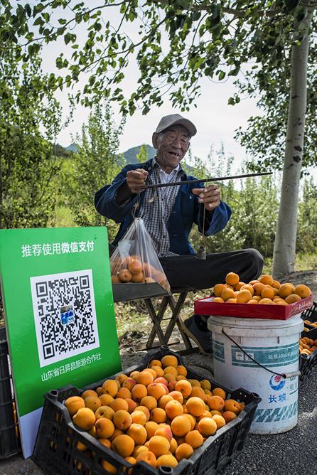 《杏福生计》农民卖杏子用上了&amp;ldquo;微信支付&amp;rdquo;(徐福祥)<br/>