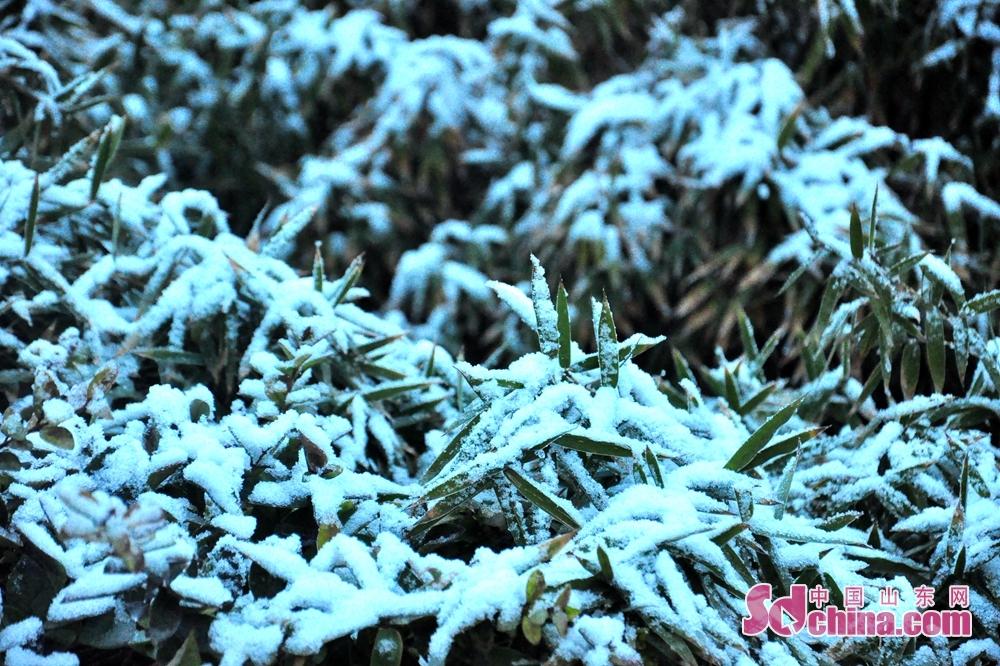 <br/>  图为竹林上覆盖着厚厚的积雪。<br/>