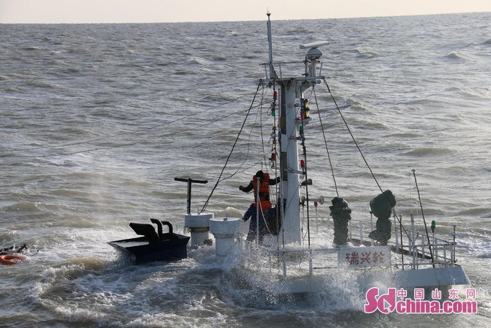 """截止目前,""""瑞兴轮""""已完全沉没,救助船舶及直升机先后救起5名遇险人员(其中1人已无生命体征),其他船舶救起4名遇险人员,1名失踪人员仍在搜救过程中。(通讯员 刘飞)"""