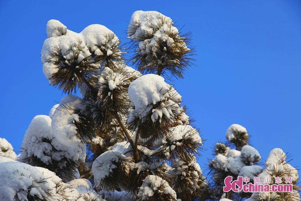 <br/>  成片的大雪压在万亩松林内的松树枝头,白绿相映,尽显北国风光。<br/>