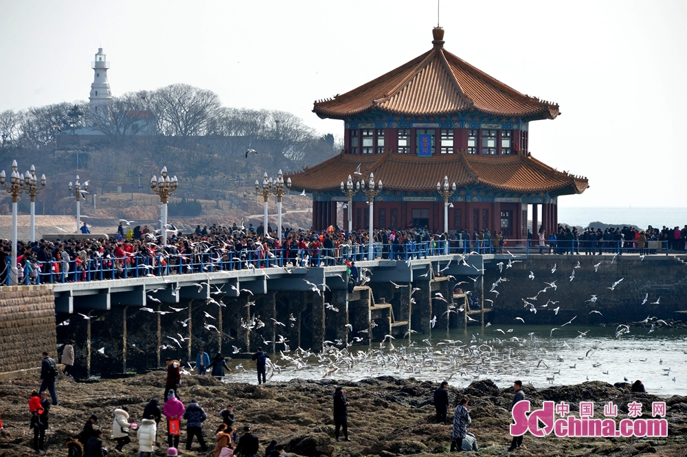 Tourists view seagulls at Zhanqiao Scenic Spot in Qingdao, east China's Shandong province, Feb 19, 2018. More and more Chinese people chose to go to scenic spots to celebrate the traditional Spring Festival this year. (Photo/sdchina.com/Wang Haibin)<br/>