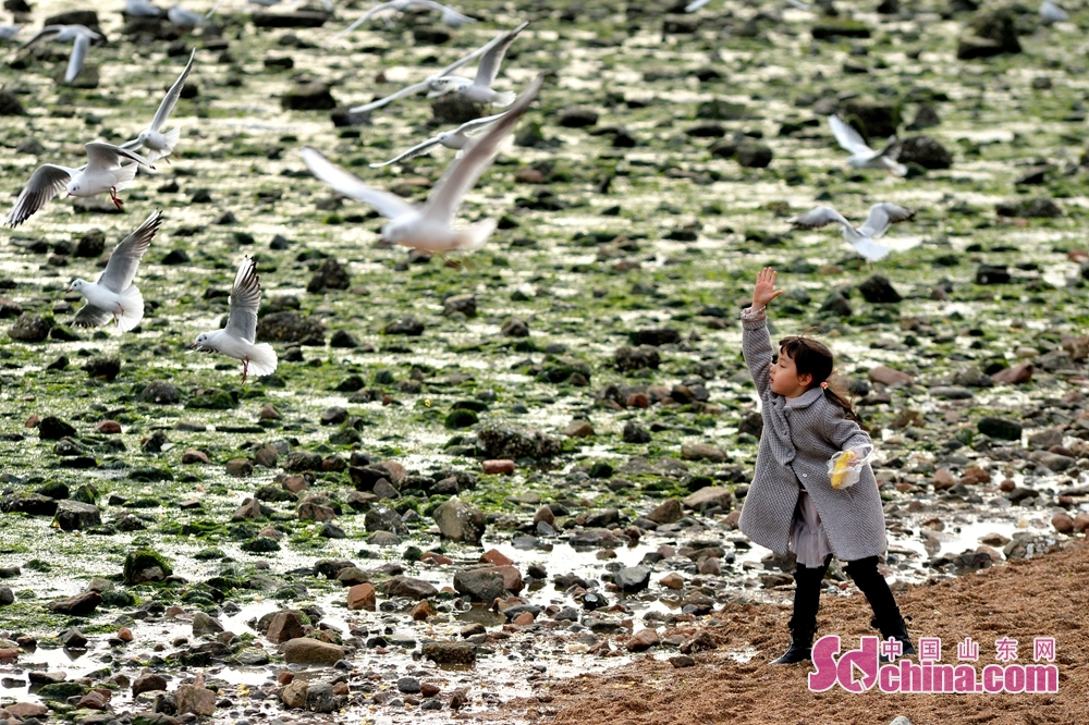 A girl is feeding black-headed gulls in Qingdao Zhanqiao Scenic Spot, east China's Shandong province, Feb 19, 2018.<br/>