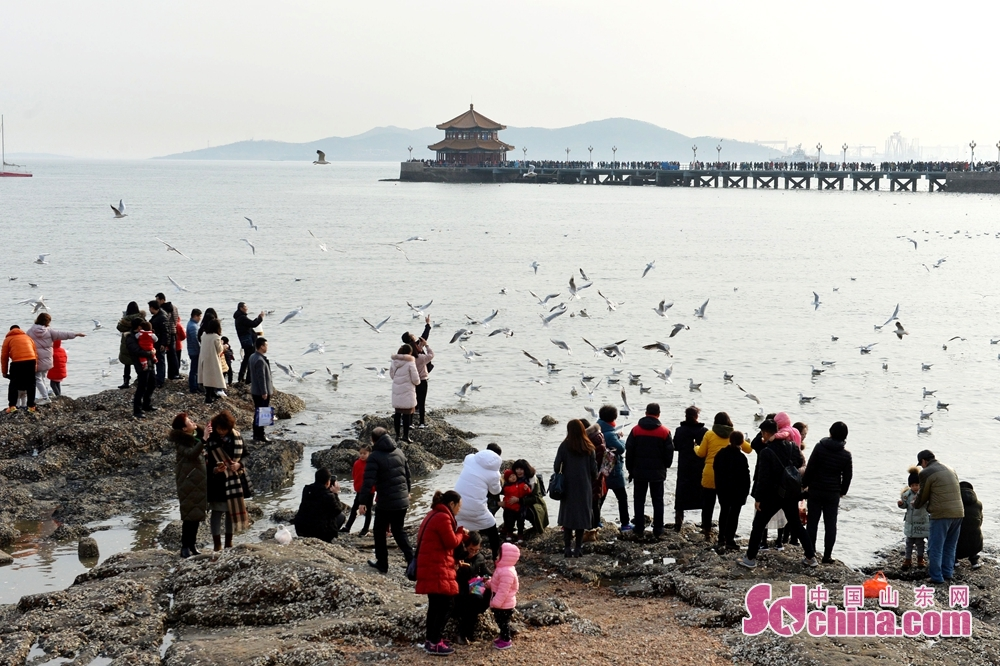 Tourists queue up to feed seagulls at Qingdao Zhanqiao Scenic Spot, east China's Shandong province, Feb 19, 2018.<br/>