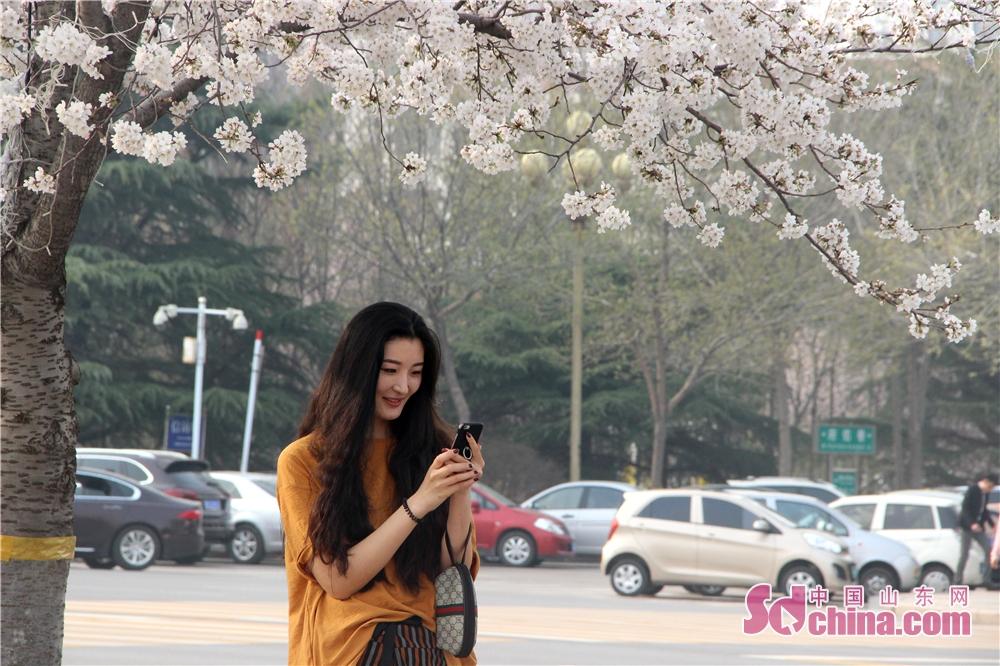 <br/>  浪漫三月,为樱花不可辜负。<br/>