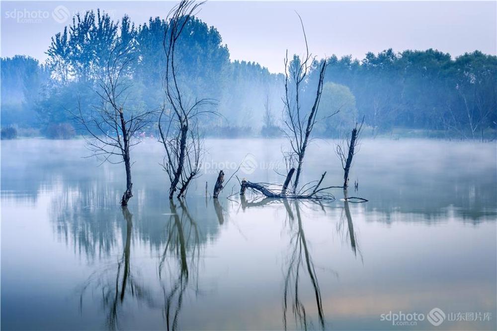 <br/>  白浪河是潍坊的母亲河。白浪河上游的白浪绿洲湿地,是潍坊人及外地游客休闲之佳境。白浪绿洲,一年四季景色不同。每次从湿地走过,都会心旷神怡。
