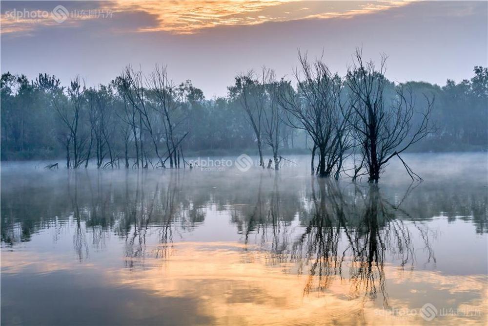 <br/>  白浪河是潍坊的母亲河。白浪河上游的白浪绿洲湿地,是潍坊人及外地游客休闲之佳境。白浪绿洲,一年四季景色不同。每次从湿地走过,都会心旷神怡。<br/>