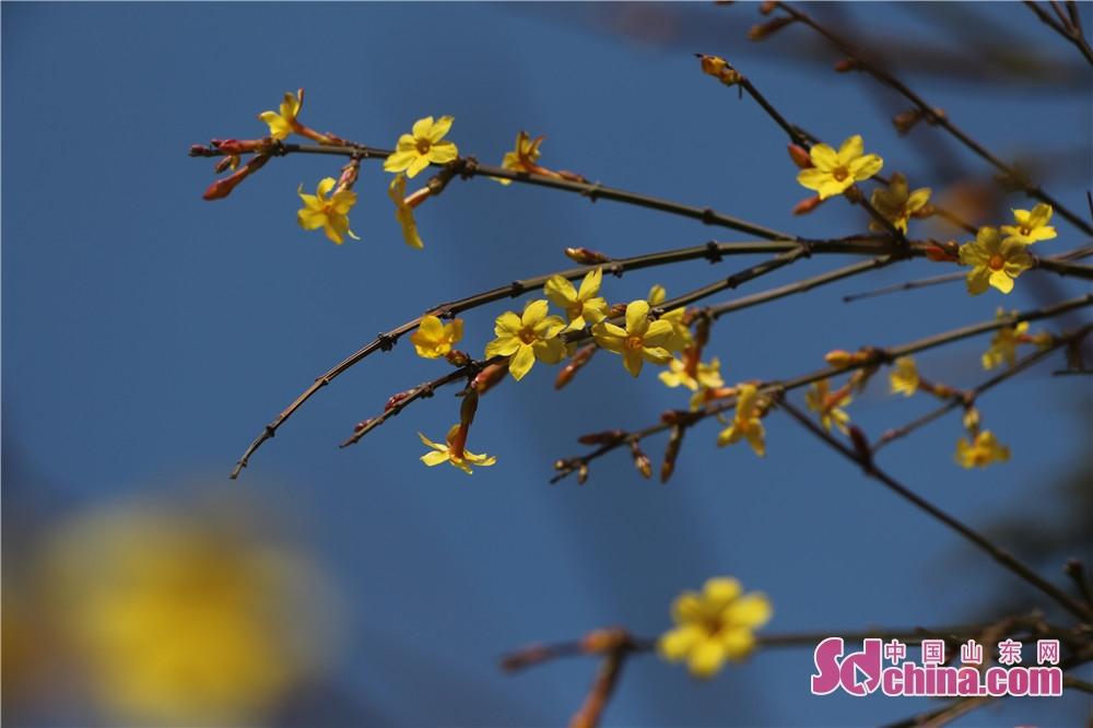 작은 노란색 꽃이 하늘 아래 조영히 있다.