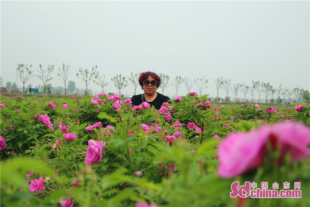 <br/>  皇城镇绿化以玫瑰为主,逐渐从玫瑰谷向村内延伸,共栽植1600万株,每到花期,全镇上亿朵玫瑰竞相开放,成为一片花的海洋,吸引大批游客前来观光。<br/>