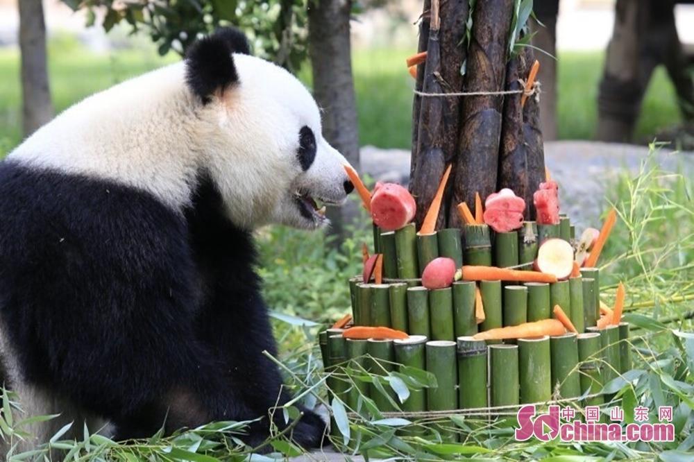 人気パンダの雅吉はケーキを食べていた。<br/>