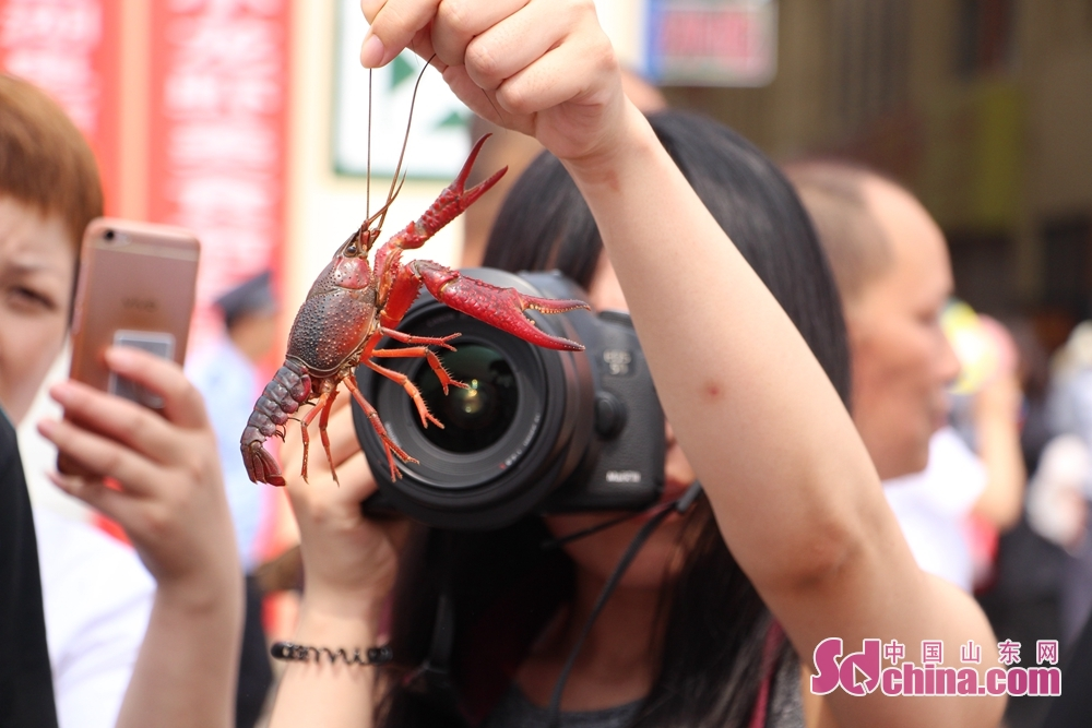<br/>  记者镜头聚焦小龙虾。