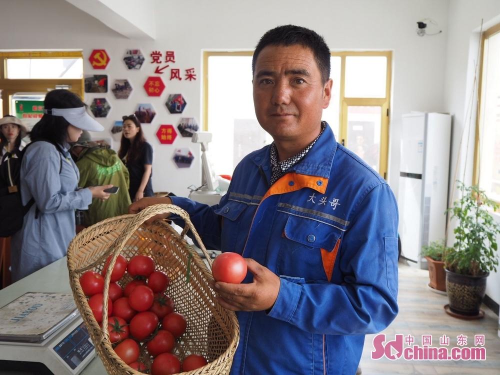 合作社职工向记者展示新鲜采摘的西红柿。<br/>