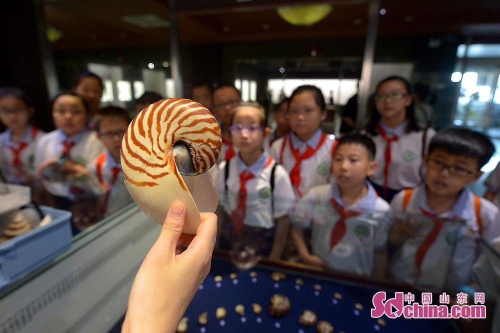 <br/>  孩子们在青岛贝壳博物馆聆听讲解员讲解鹦鹉螺标本。<br/>