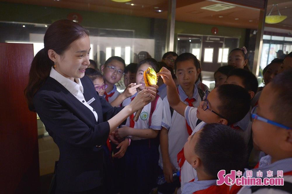 <br/>  青岛贝壳博物馆的讲解员为孩子们讲解贝壳的透光性。