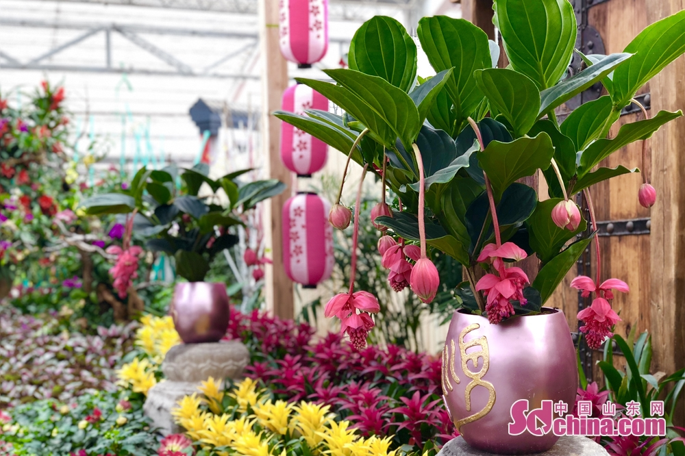 <br/>  近年来,青州花卉向集培育、种植、销售于一体的立体化支柱性产业方向高速发展。<br/>