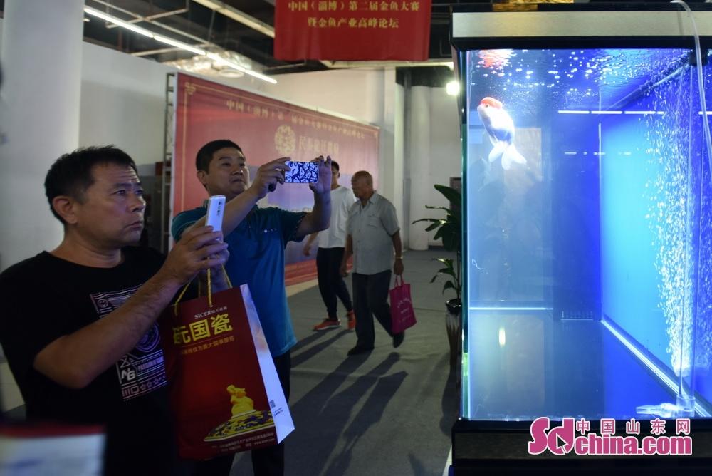 <br/>  入围的金鱼成为了市民纷纷拍照的对象。