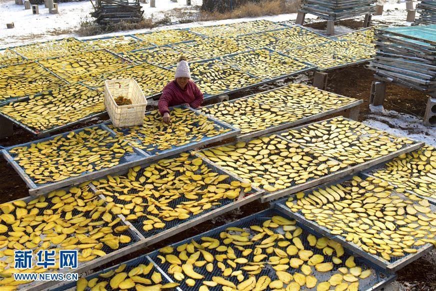1月10日,山东省枣庄市水泉镇倪山口村农民在晾晒地瓜干。