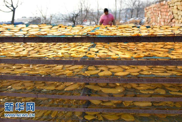 1月10日,山东省枣庄市水泉镇倪山口村农民在晾晒地瓜干。<br/>