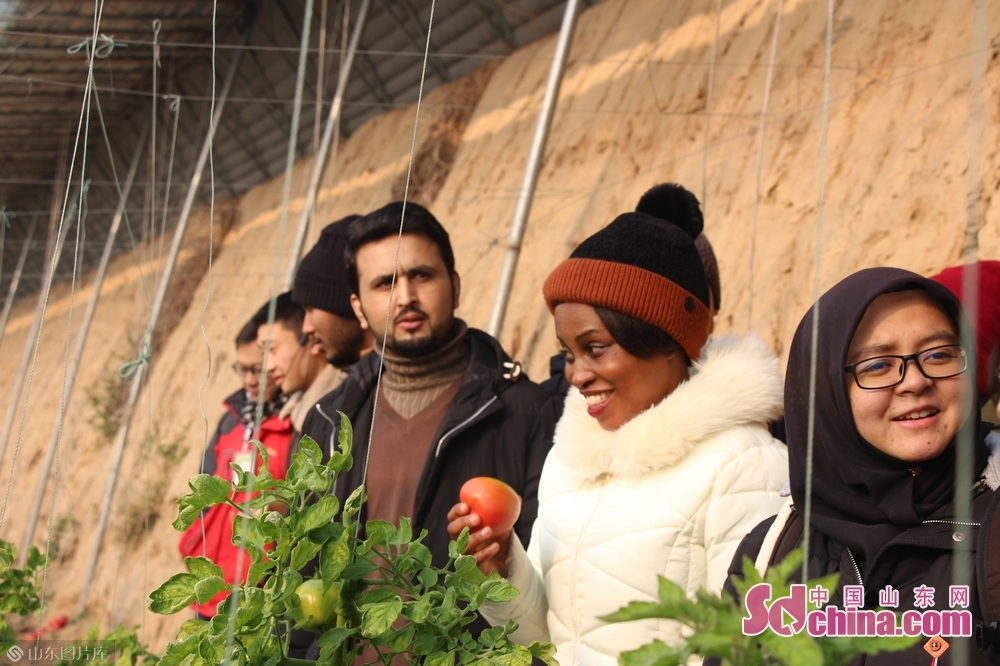 Foreigners visit Huiquan Agro-ecological Park in Zhangqiu District of Jinan, capital of Shandong Province, on January 3, 2019. More than 10 foreign students at Shandong University arrived in Zhangqiu Huiquan Agro-ecological Park to gain intuitive insights into the development of modern agriculture and agricultural tourism in Shandong.<br/>