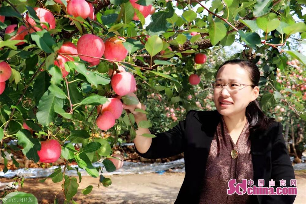<br/>  被果农亲切的称为&ldquo;苹果镇长&rdquo;的中庄镇镇长刘茜茜正在果园为沂源红苹果代言。<br/>