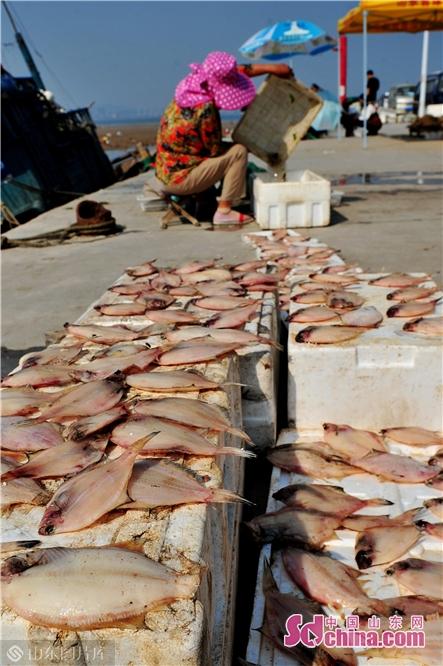 <br/>  2019年10月3日,这是渔民在青岛崂山区港东码头晾晒的比目鱼干。<br/>