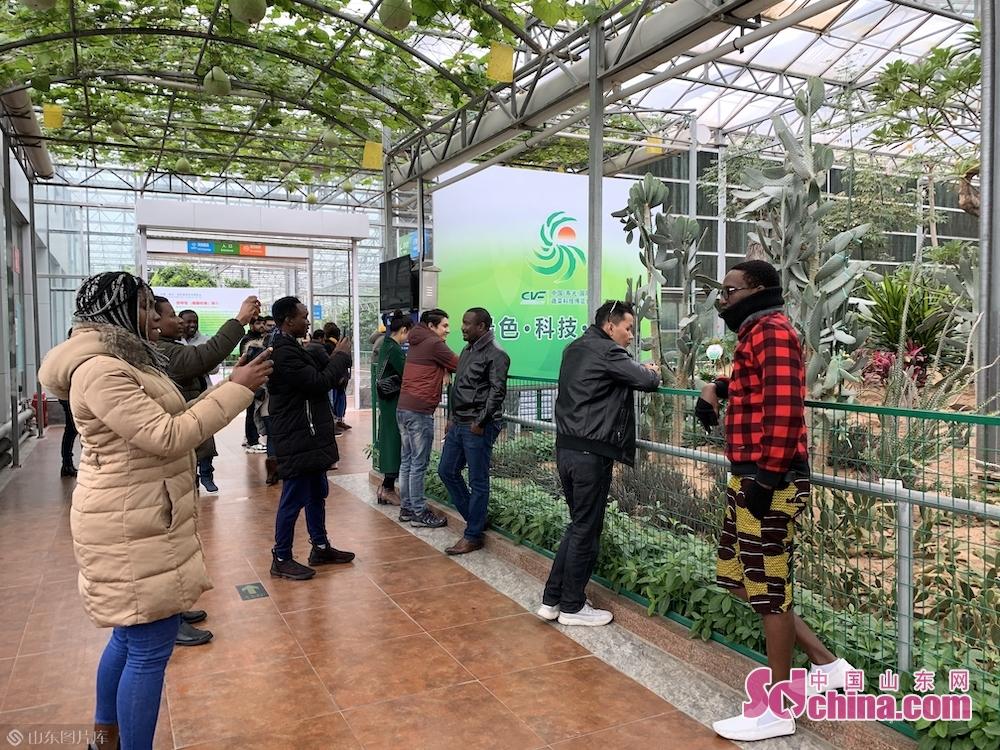 <br/>  来自柬埔寨的陈泰告诉记者:&ldquo; 这些形色各异的水果蔬菜非常吸引人,更让我感兴趣的是,这些蔬菜背后的种植技术,菜农是怎样种植出这么神奇的蔬菜,我十分惊讶。我的专业是语言学,很喜欢通过这种形式学习课外知识,深入了解山东、了解中国。&rdquo;<br/>